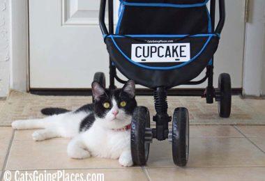 black and white tuxedo cat lounges near stroller wheels