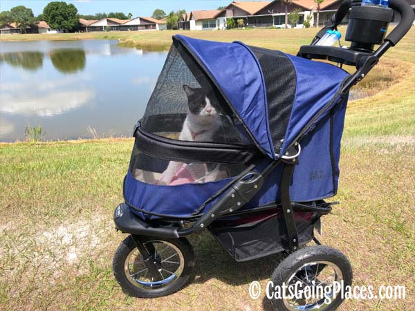 black and white tuxedo cat in petgear jogger stroller