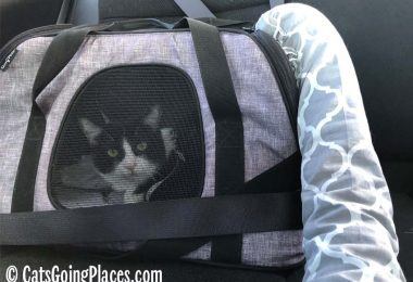 black and white tuxedo cat in carrier with vent attached