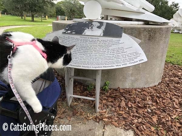 black and white tuxedo cat looks at sponsor list