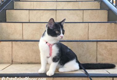 black and white tuxedo kitten sits on stairs